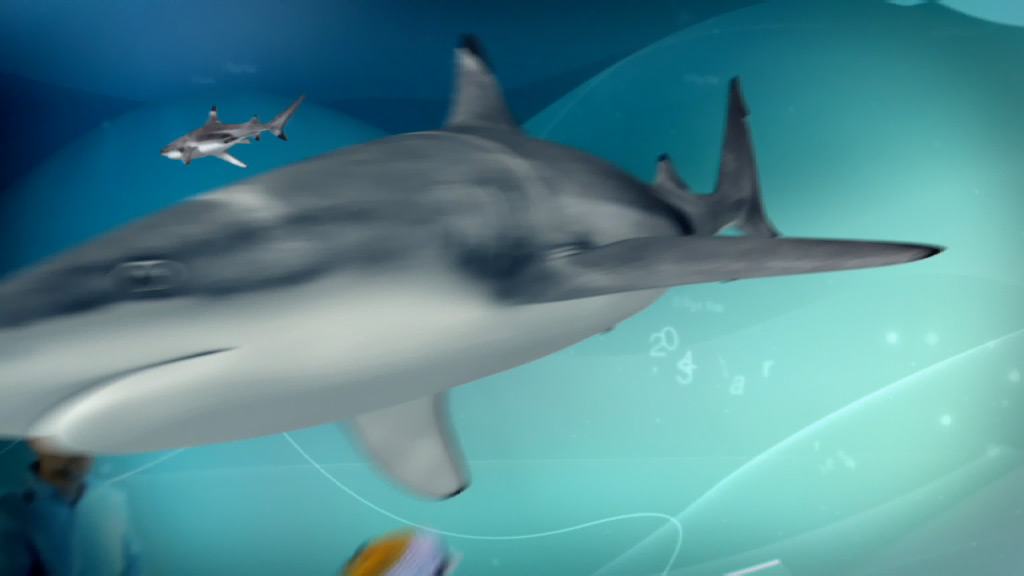 ZDF opener for Abenteuer Forschung, 3D shark surrounded by motion graphic elements